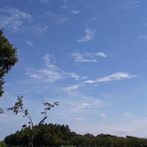 水元公園大好き!ここが私の癒しの場所