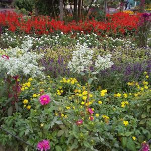 水元公園大好き!グリーンプラザの美しい花々