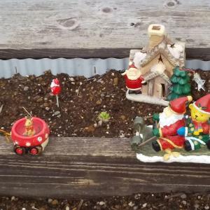 水元公園大好き!グリープラザ、クリスマスの庭