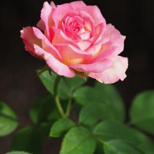 秋の花が美しい『マルク・シャガール』(デルバール)