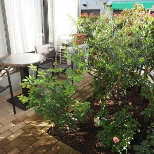 雨上がりの庭で、次の1株や冬の花壇を考える