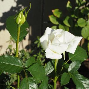 色と香りが素晴らしい『アンナプルナ』