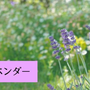 【アロマ・精油事典】ラベンダー