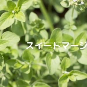 【アロマ・精油事典】スイートマージョラム
