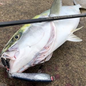 魚の視覚や視野から徹底分析!ルアーって魚からどう見えている?