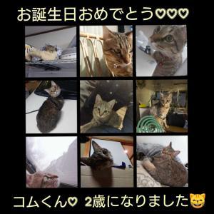 大阪 給湯器交換  看板猫  コムくんお誕生日おめでとう(* ¨̮*)/(*¨̮ *)/