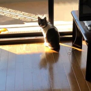 猫猫 室内で日向ぼっこ