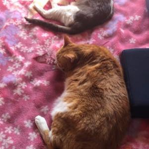 猫猫 それぞれ