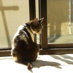猫猫 要注意!