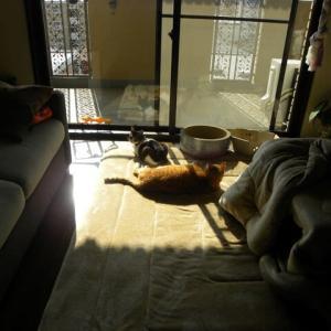 猫猫 尻尾 ヽ(^。^)ノ