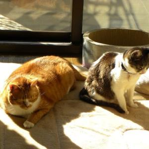 猫猫 11月まとめ