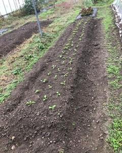 田舎暮らし!家庭菜園