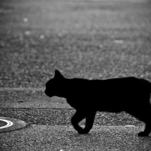 黒猫   『K』BUMP OF CHICKEN