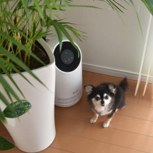 ペットと暮らす部屋づくり◇小さな空気清浄機でどこでも手軽に空気を循環【PR】
