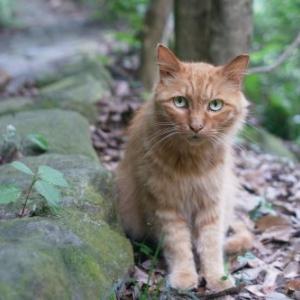 野良猫のタンゴ