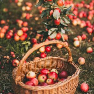 Harvest Moon(収穫月)