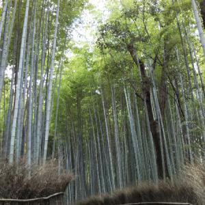 嵐山巡回ポタ