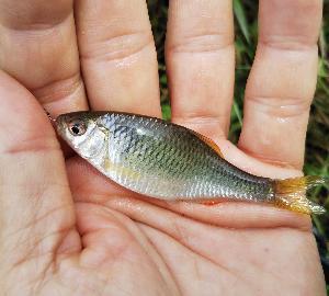 タナゴ釣りに行ったんだよなぁ・・・