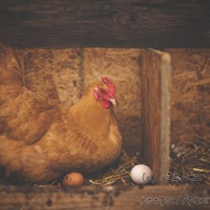 卵の栄養価、ゆで卵1つのたんぱく質、1日に食べないといけない量について