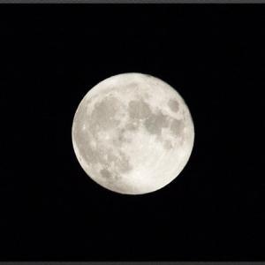 昨日は満月