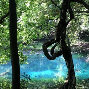 山形県遊佐町の丸池様の話