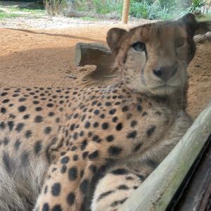 シンガポール動物園とリバーサファリにいってみた