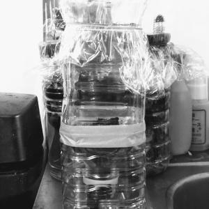 ペットボトルコンポスト増殖中