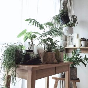 【初心者向け】育てやすいおしゃれな観葉植物5選!私の経験をもとに自信を持っておすすめする5種類と購入場所をご紹介!