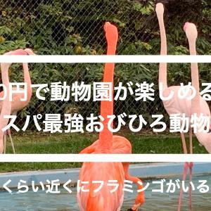 コスパ最強【おびひろ動物園】遊園地付き動物園を1時間で周遊!フラミンゴがオススメ