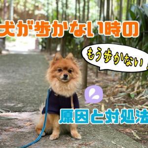 犬が散歩中に歩かなくなる理由は?やってはけない対処法などを解説!