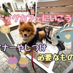 愛犬とドッグカフェに行こう!マナーやしつけ、必要なものなどを解説☆