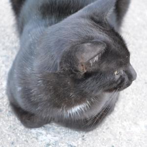 防波堤の猫(黒猫、キジ白)