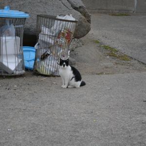 12月11日の漁港の猫たち 魚を食べるキジトラ