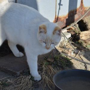12月17日の駐車場の猫 白 シャム キジトラ サビ 黒