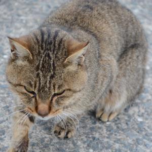 12月21日の漁港の猫一家 トラ チョビ一家 サバ ダイヤ ダンゴ