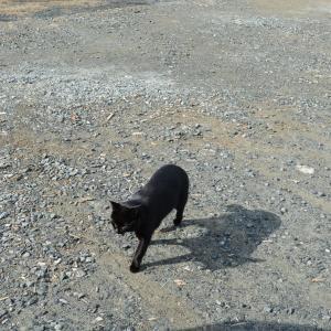 12月25日の漁港の黒猫