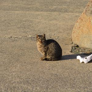 大みそかの漁港の猫 ゴマ兄弟 サバ ダイヤ ボス