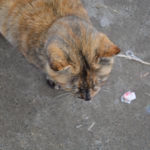 1月6日(2) 漁港Aの猫 サビ カオ ハナ ボス