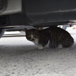 1月6日(1) 漁港Bの猫 ダイヤ 白黒 ダンゴ