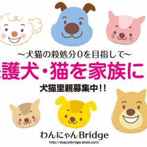 子猫キキ・みょんみょんのブログをはじめました。