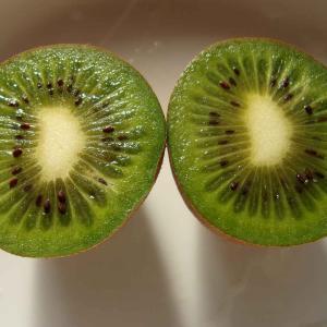 今年のキウイの品質と樹の生長について(ヘイワード)