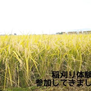稲刈り体験に参加してきました