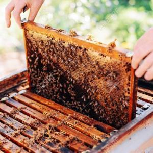 株式会社は、ミツバチの巣箱じゃないぞ