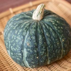 かぼちゃに白いカビ?かぼちゃの切り口が白くなる原因とは?