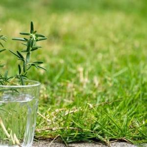ローズマリーの冬越しで寒冷地の場合はどうする?植え替えは?