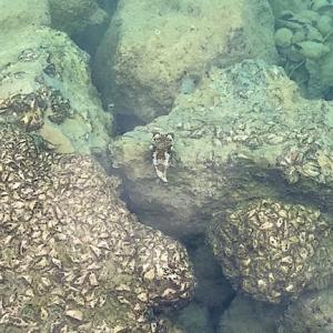 沖縄離島|沖縄本島から行ける有名な離島古宇利島