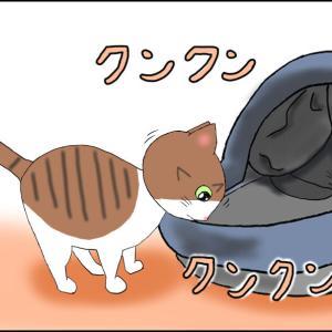 猫用ベッド買ってきた! ~その3~