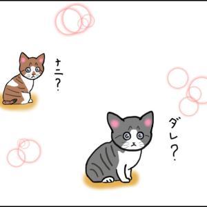 ソラの話① 友人が仔猫を拾ったと言うので行ってみた!