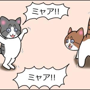 【猫漫画】ソラの話④ いざ帰宅!仔猫たちの大移動終了!疲れて眠りこけるかと思いきや…!?