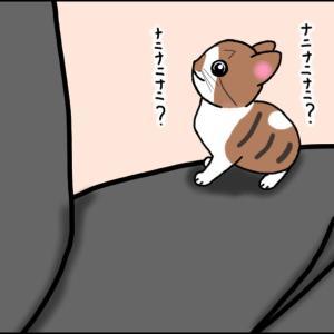 【猫漫画】ソラの話⑤ 仔猫たちとの新生活始まる!